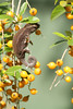 Chameleon (IC 360 Photo) Tags: chameleon ic360