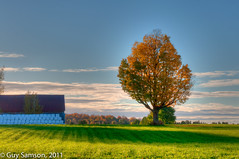 Arbre et guimauves / Tree And Marshmallows (guysamsonphoto) Tags: tree fall automne countryside nikon campagne arbre hdr nikond90 70300vr nikkor70300vr guysamson