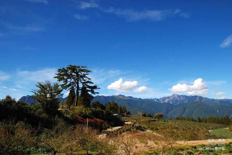 2011_1106福壽山農場DSC_3403