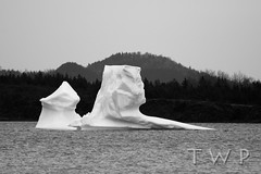 The Only Constant is Change (WanderWorks) Tags: ocean sea blackandwhite bw canada ice monochrome forest newfoundland landscape bay labrador hills iceberg eisberg     toppurinn  dsc4695nbwc1g