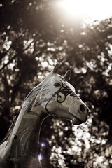 """""""Passing Through"""" (Get Pushed version) [Explored] (skippys1229) Tags: horse statue canon rebel 50mm florida bokeh flare canonrebel fl passingthrough ocala sunflare horsefever marioncounty horsestatue 2011 ocalafl ocalaflorida marioncountyfl rebelt1i t1i canonrebelt1i rebelt1 getpushed"""