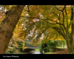 Lichtentaler Allee in Autumn #4 (Marc Haegeman Photography) Tags: autumn trees fall germany deutschland badenbaden hdr lichtental lichtentalerallee