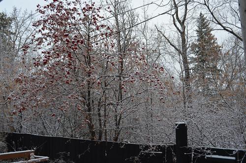 We finally had snow
