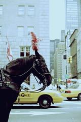 (TOPSHELFJUNIOR) Tags: horses ny newyork subway centralpark manhattan taxi police bikes americanflag applestore taxis policecar kaws newyorknewyork icecreamtruck bikemessenger kidnplay policelights