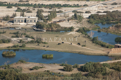 Azraq Shishan Pools
