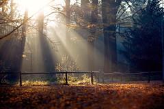 morgens (~janne) Tags: autumn sun berlin 50mm herbst olympus sonne schlosspark charlottenburg wetzlar leitz strahlen janusz summiluxr e520 ziob