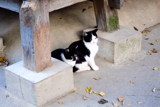 Today's Cat@2011-11-15