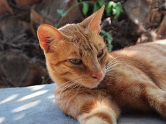 Kitty (orbed) Tags: greece zante ep1