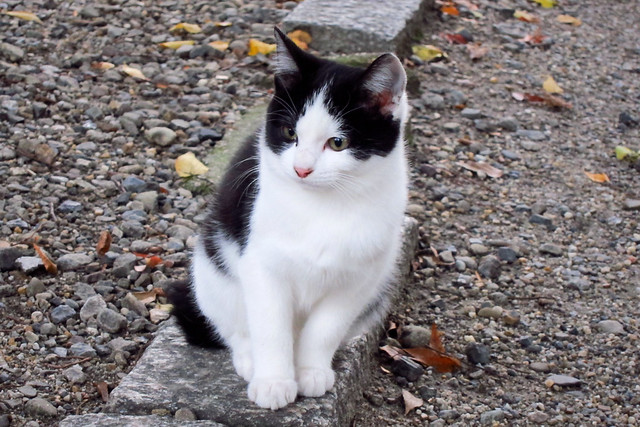 Today's Cat@2011-11-21