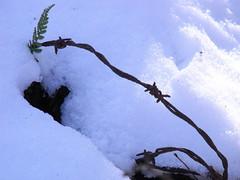 still, here (dmixo6) Tags: november winter canada barbedwire pow muskoka barbwire dugg dmixo6