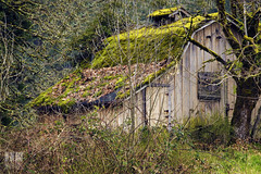 The Greenhouse Effect (Ian Sane) Tags: street old trees wild house water grass oregon barn creek silver ian moss weeds silverton south cottage images greenhouse effect blackberries sane the