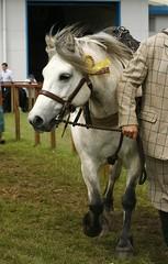 Highland (Elrenia_Greenleaf) Tags: show horse royal highland ponies equestrian 2011 ingleston