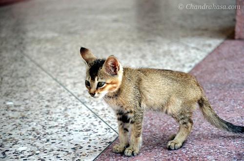 A Sweet Kitten