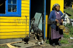 60000025 (wolfgangkaehler) Tags: southamerica southamerican chile navarinoisland old oldwoman indian indianwoman woman indigenous indigenouspeople yamana yamanapeople yamanayaghanpeople yaghan yaghanpeople house chicken cat dog pet pets