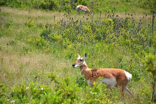 montana july 2011_1888