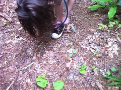 Shoelace 2