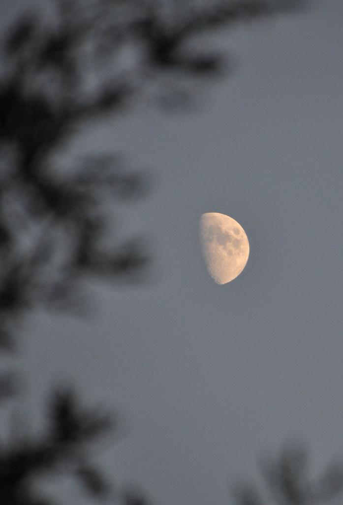 SGM.Dame lune.4.19h30 le 05.10.11