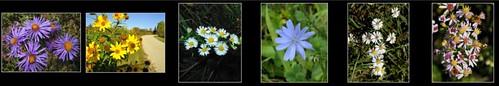 Nikon P7100 flower photos by joer