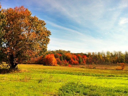 Autumn Foliage in Westfield, MA