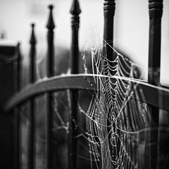 A fence fit for the Munsters, Lily would be proud (ewitsoe) Tags: bw holiday halloween fog scary nikon spiderweb poland polska spooky tvshow zombies fenced vampires poznan hff munsters d80 monsterslivehere fernce happyfencefriday