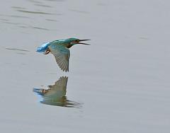 Oasi di Torrile, Parma (renzodionigi) Tags: nature birds uccelli naturephotography torrile