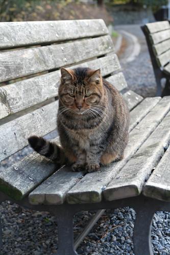 homeless cat @ Nijo-jo