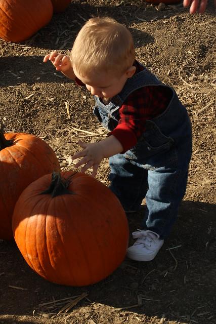 Fall Farm 2011 151
