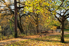 DSC_2520 (Gary Cheung SY) Tags: park wood uk travel autumn england colour tree green english nature forest garden manchester nikon scenery europe cheshire northwest britain sp stockport rps british gps tamron geo f28 royalphotographicsociety tamron2875mm 2875 2875mm tamron2875mmf28 tamronsp geo1 colorphotoaward d700 flickraward phottix nikonflickraward geoone phottixgeoone