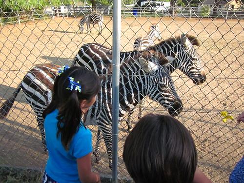 Zebras 0052_2