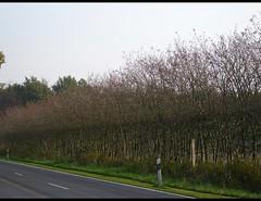 rboles desnudos - Nackte Bumen 352 (mariposa-latina) Tags: autumn rboles herbst otoo desnudos bumen sinhojas kahlebumen