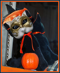 halloween cat photomanipulation blackcat pumpkin mirror witchhat digitalart cattoy venetianmask
