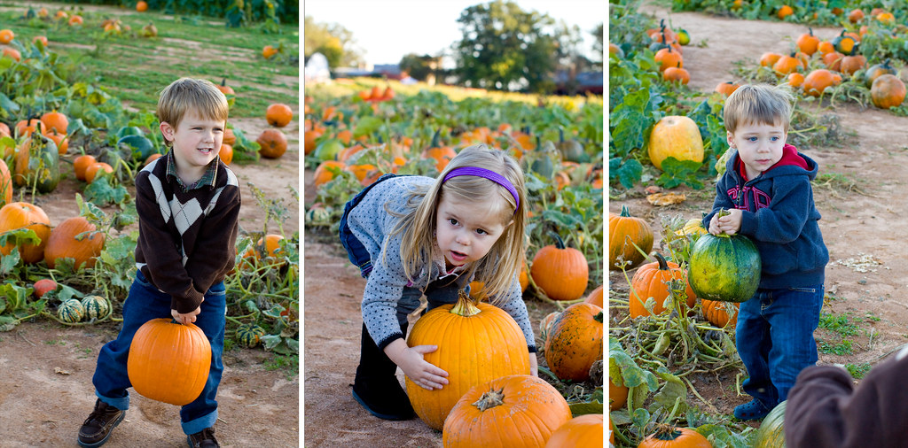 Storyboard 4 Flickr Best child family photographer in charlotte huntersville Concord Kannapolis pumpkin patch photography