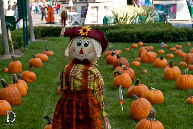 Pumpkin Patch - Downtown Disney