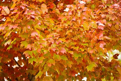 fall-0069-2