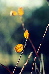 (supchi) Tags: trip autumn mountain color green fall leaves yellow forest canon outdoors europe bokeh bulgaria endofsummer 40d canonef50mm118ii canon40d