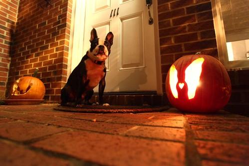 frito's pumpkin