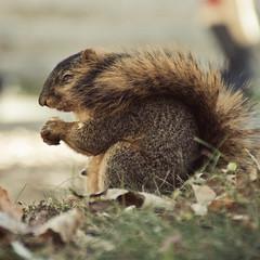 nose (Barbara.K) Tags: portrait animal rodent squirrel dof bloomingtonin canon500d tamronaf18200mmf3563 differentialfocus eos500d canonrebelt1i