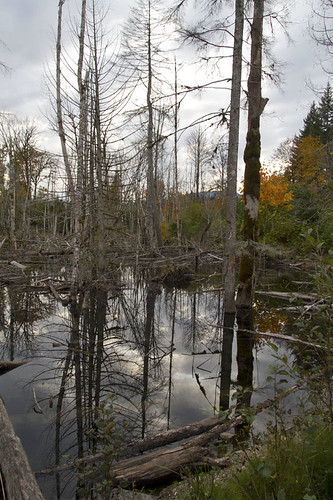 reflections in the beaver pond