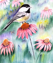 Sweet Carolina Chickadee (Kooklamou - MA., USA) Tags: family november autumn bird beautiful beauty cemetery canon children wonder blessings wings colorful close coneflowers bokeh jesus blossoms peaceful joe grandchild buds holyoke neverforget fragile brightness heartfelt feelings lovingly inmemorium daydreams beautifulday iwish inthedistance forestdalecemetary