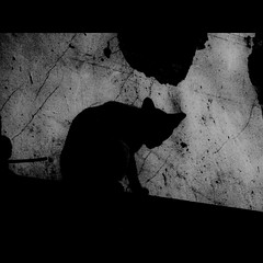 Kitten in the Darkness (tak4tak4) Tags: bw white black monochrome cat square thailand photography photo blackwhite nikon kitten darkness image bangkok monotone squareformat coolpix p500 whiteblack             blckbty