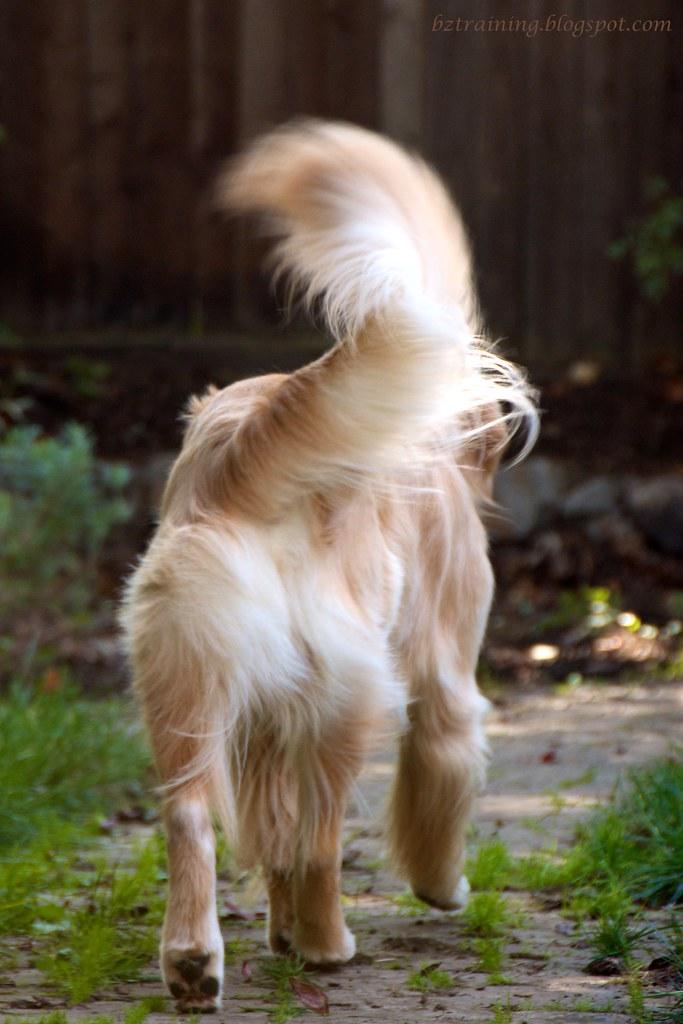 Telling Tail