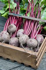 110809_026_Beetroot 'Action'.jpg (Alan Buckingham) Tags: harvest vegetable harvesting woodenbox beetrootaction