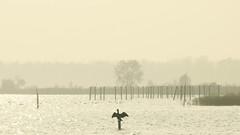 Dry (Harry Mijland) Tags: holland nederland loosdrecht dearharry harrymijland