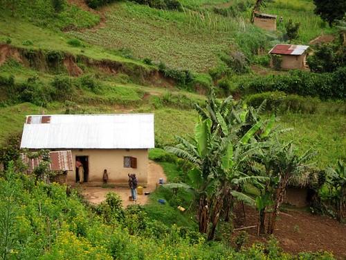rural uganda farming by Danalynn C