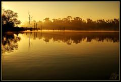 Basking in the sunlight (WanaM3) Tags: light mist nature water sunrise golden texas scenic bayou pasadena blueribbonwinner bayareapark armandbayou wanam3