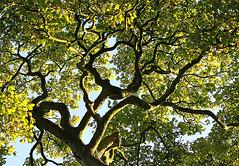 (Badder AlQasimi) Tags: uk sun tree green shadows branches rays شمس شجرة أشعة ظلال أغصان