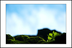 new life (e.nhan) Tags: life new blue light green art nature leaves closeup leaf colours dof bokeh backlighting enhan