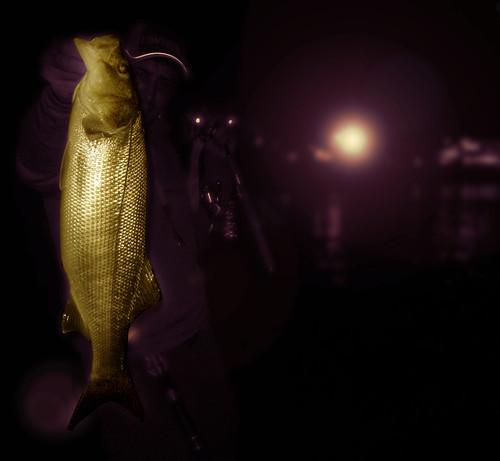 Rockfishining experience