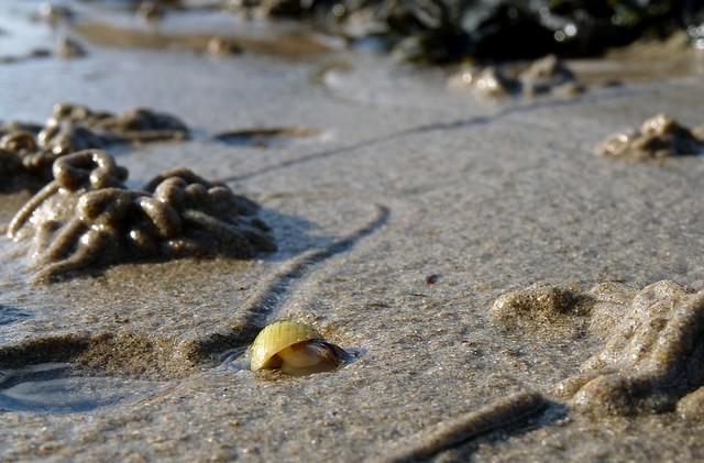25260 - A Snails Life