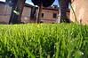 rayo de sol (juanpablo.santosrodriguez) Tags: wallpaper macro verde green sol grass rayo sunray cesped fondodeescritorio pastrana